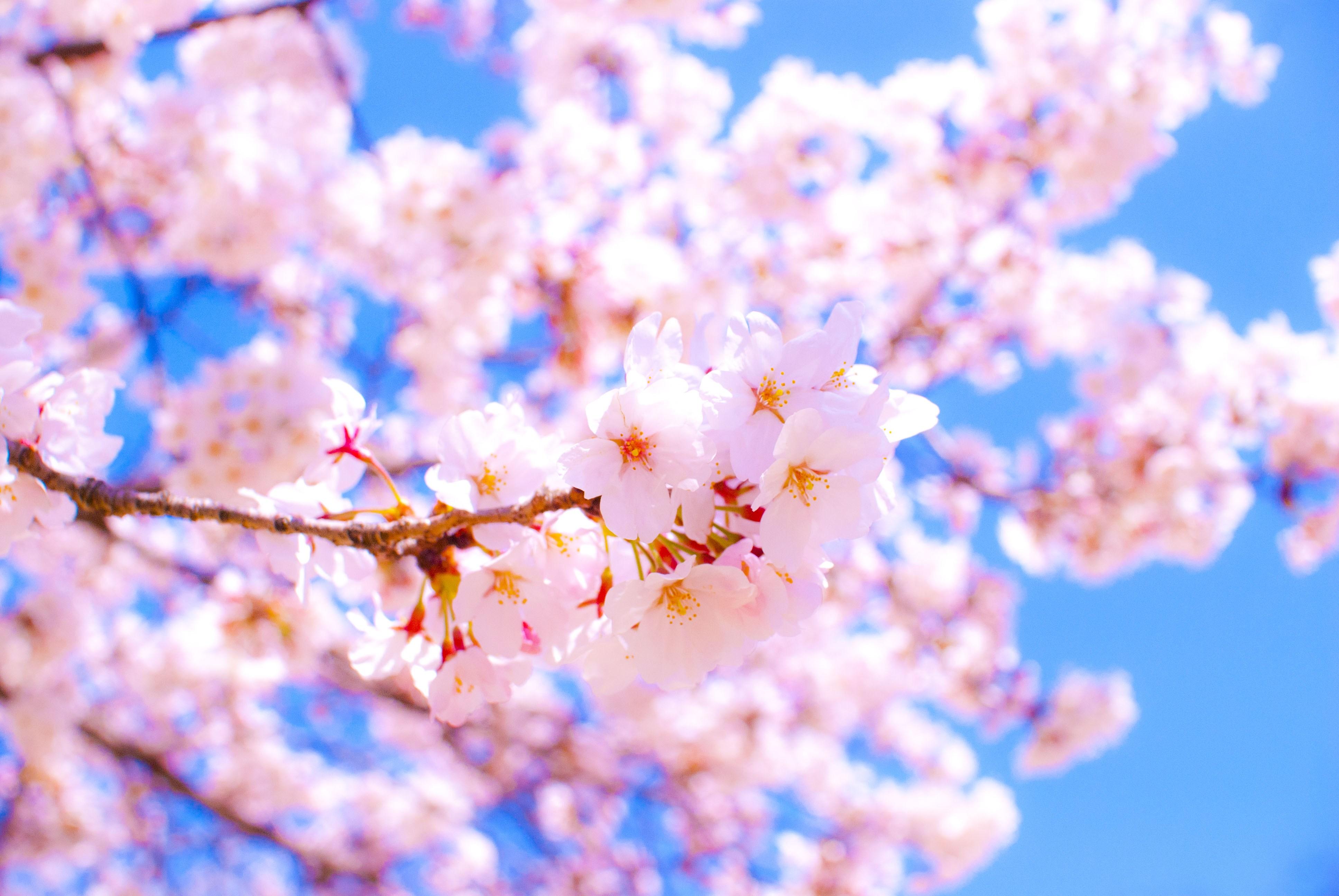 やっと春ですね・・・