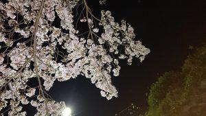 先週の続き♪夜桜☆