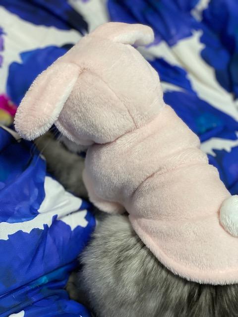 ウサギのエメちゃん(=^・^=)